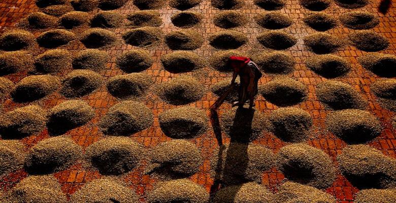 Индия сушка кофе